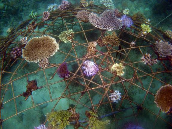 Biorock reef restoration for sustainable ecotourism in Gili Trawangan