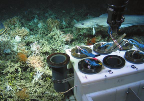 Protect the deep sea