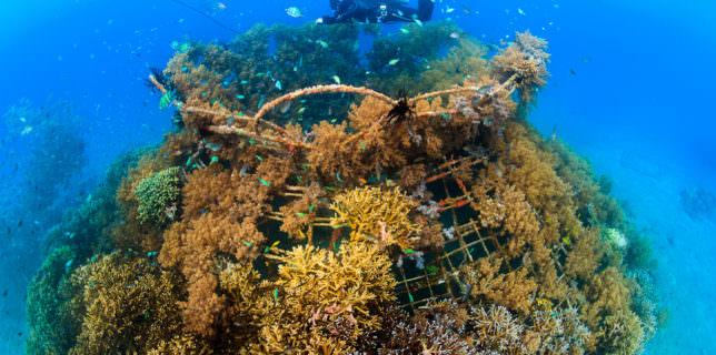 Biorock, Indonesia, Pemuteran, coral, restoration