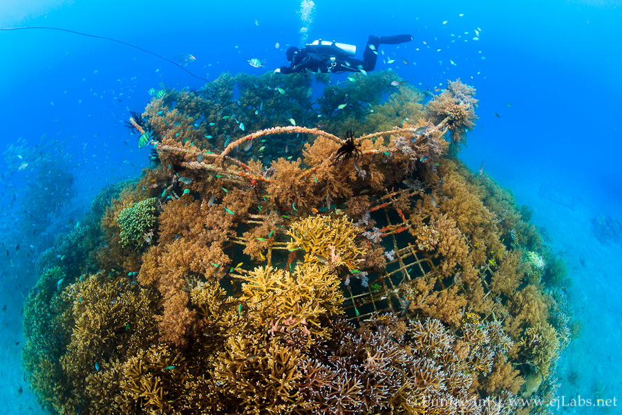 CCell Provides the Energy to Save Coral Reefs