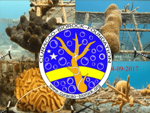 Before and After : Biorock Electric Reefs in Curaçao