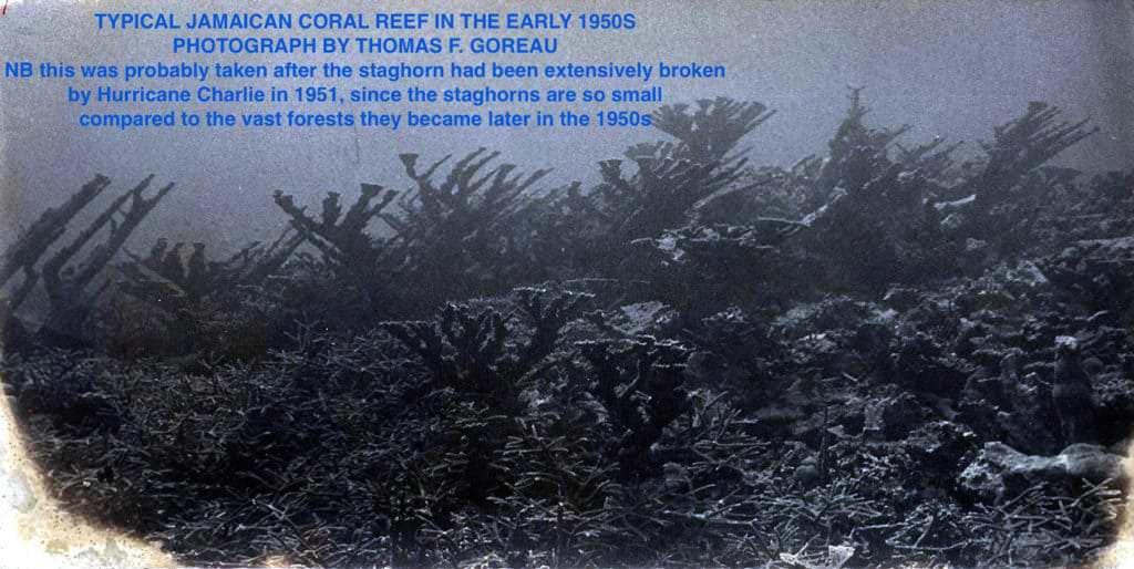 goreau, biorock, Jamaica, 1950, coral reef