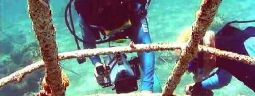 Goreau, Hilbertz, Bali, Indonesia, Pemuteran, Biorock, coral, reef, restoration