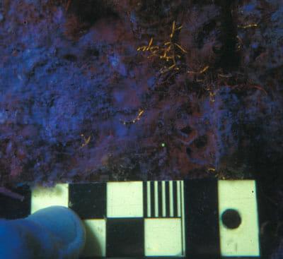 nightsea juvenile coral <1mm diameter fluorescing