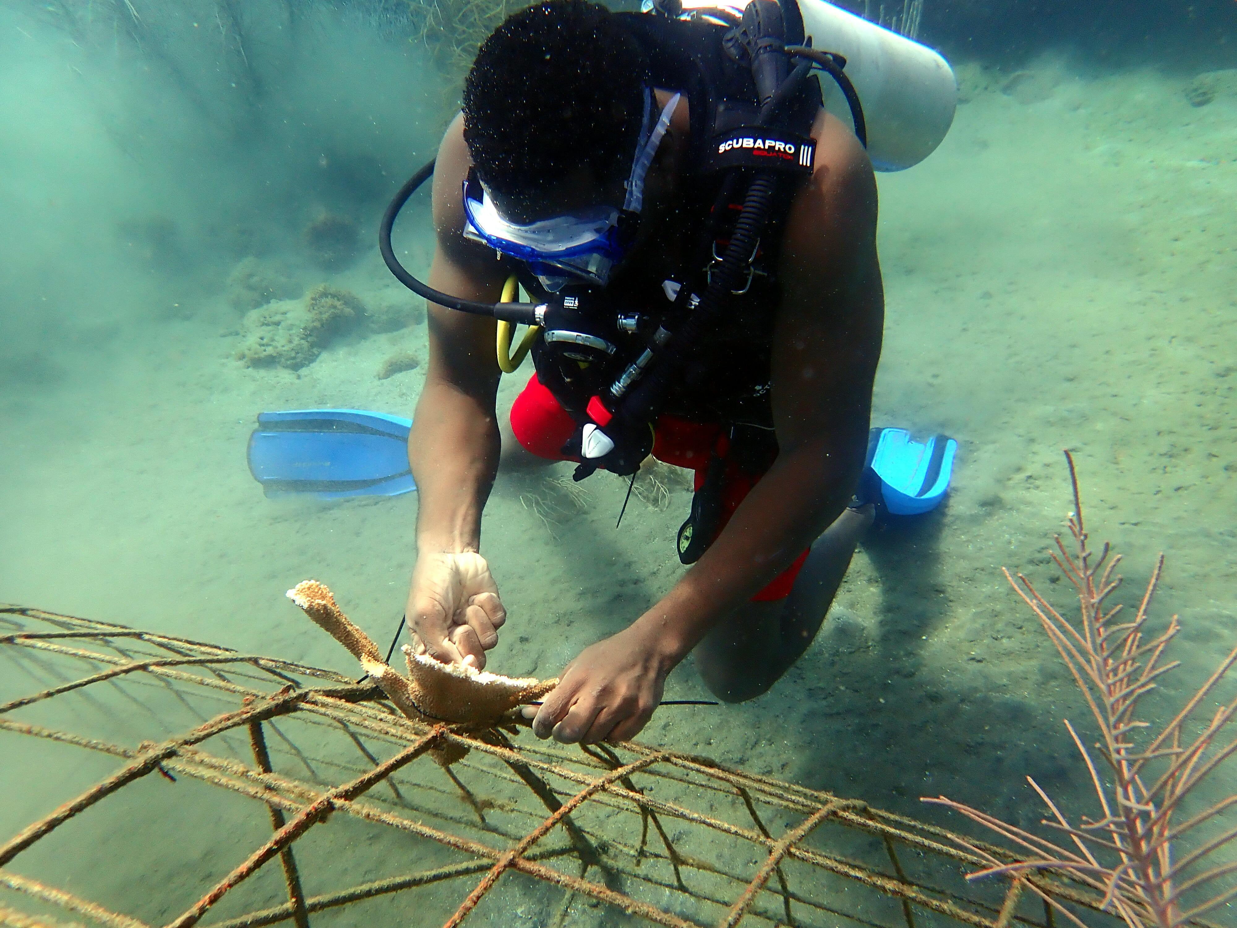 New Biorock coral reefs in Grenada