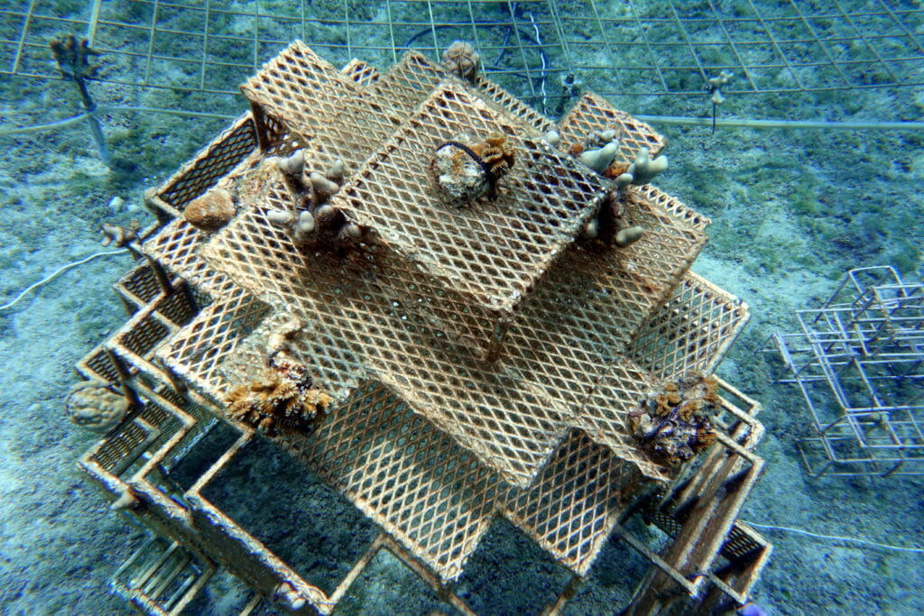 New Cozumel Coral Restoration project - Global Coral Reef Alliance
