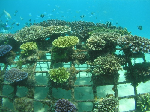 10 years ago on Gaia Discovery – Thomas Goreau on Coral Restoration with Biorock
