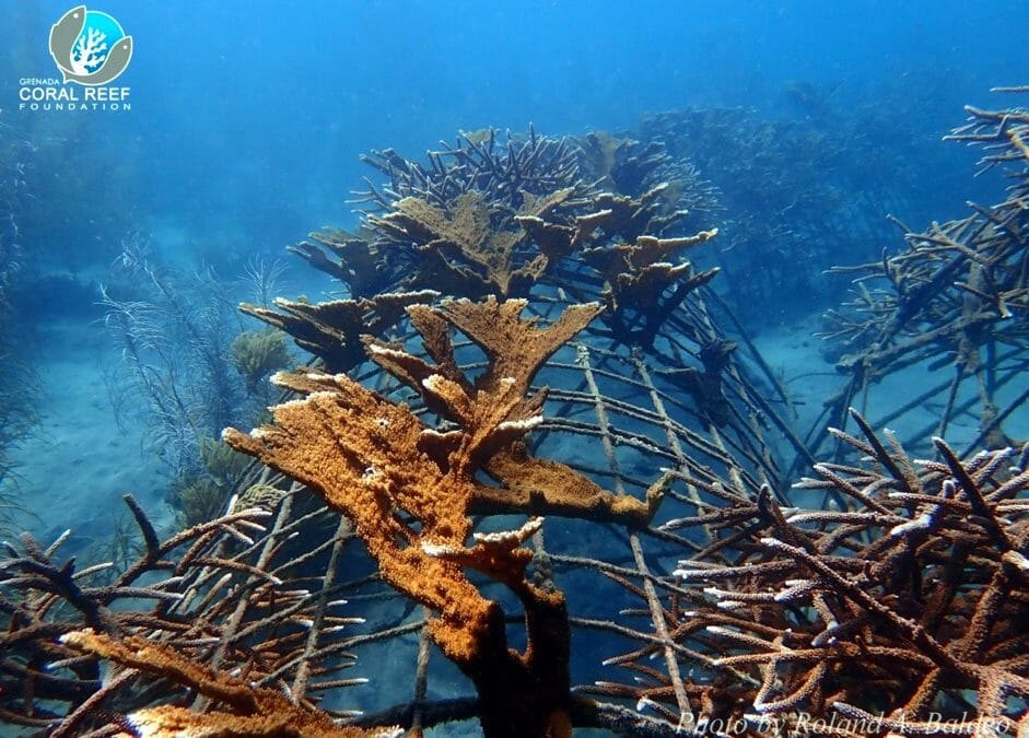 Global Coral Reef Alliance 2020 Winter Solstice Report