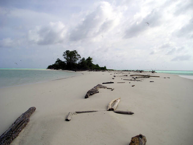 The sandspit at the southern end of the island, littered with logs, is burying a coral reef. (Caspar Henderson)